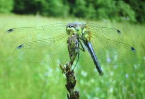 Filz-Infoabend im Tagungshaus Wörgl - Libelle