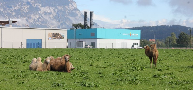 "Kamele vor der ""Sorglos-Wärme""-Fernwärmezentrale der Stadtwerke Wörgl im September 2015."