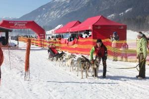 Schneebedeckte Winterkulisse für die Husky- und Hunderennen 2016 am Angerberg.