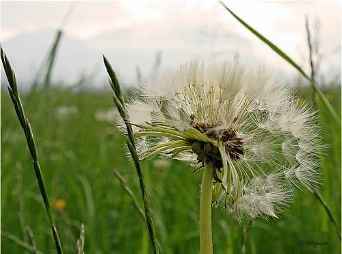 Wildpflanzen im Frühjahr für die eigene Gesundheit nützen - Infos dazu gibt´s im Tagungshaus. Foto: Fohringer