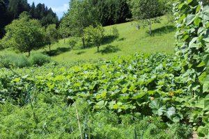 Gartenrundgang Schattleit 21. Juli 2017. Foto: Veronika Spielbichler