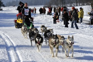 Am 30. und 31. Jänner 2016 finden in Angerberg wieder Husky-Rennen statt. Foto: Stefan Astner