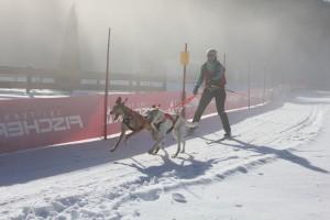 Skijöring mit Hunden - tolles Konditionstraining für Mensch und Tier.