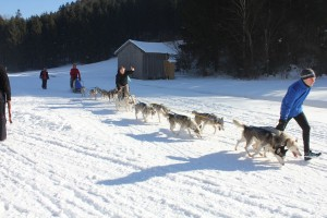 Husky- und Hunderennen 2016 am Angerberg