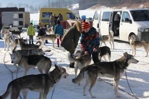 Rund 400 Hunde starten heuer bei den Husky- und Hunderennen auf Schnee am Angerberg.