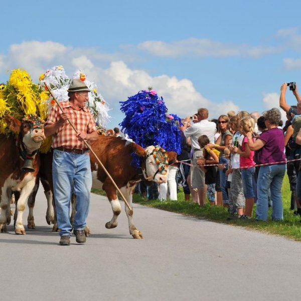 Am 17. September 2016 feiern die Angerberger Bauern wieder ihren Almabtrieb. Foto: Hannes Dabernig