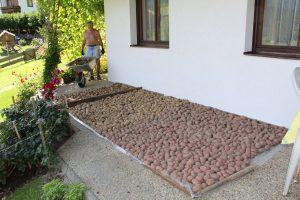Kartoffelernte auf der Schattleit am 31. Juli 2017. Foto: Veronika Spielbichler