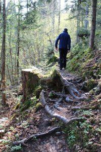 Über Wurzeln und kleine Wasserläufe - der Fuchsweg bietet ein abwechslungsreiches Wander-Erlebnis. Foto: Spielbichler