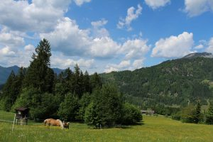 Der höchste Punkt wird mit rund 700 Metern Seehöhe am Riederberg erreicht. Von da geht´s entlang der Feriendorf-Zufahrt bergabwärts bis zum Forstweg auf den Pfaffenberg. Foto: Spielbichler