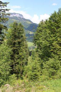 Eine Schneise im Wald gibt den Blick frei auf den Burghügel der bereits verfallenen Wörgler Wehrburg. Foto: Spielbichler