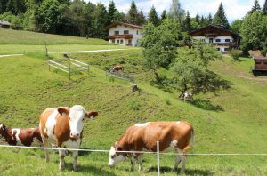 Zum Bruggberg führt ein Wanderweg in der Verlängerung des bestehenden Fuchsweges. Foto: Spielbichler