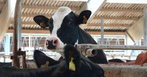 Filmemacher Andreas Pichler gibt einen tiefen Einblick in die industrialisierte Milchwirtschaft. Foto: Andreas Pichler