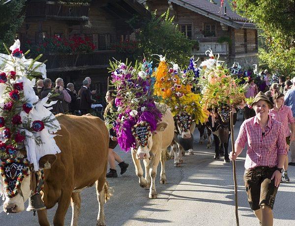 Das Ende des Almsommers wird auch 2018 mit Almabtriebsfesten in der Ferienregion Hohe Salve gefeiert. Foto: Hannes Dabernig