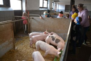 """Aktionstag """"Landwirtschaft macht Schule"""" beim Fohring-Bauern in Wörgl-Boden am 18.10.2018. Foto: Veronika Spielbichler"""
