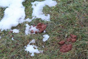 Hundekot nach Schneeschmelze in Wörgl. Foto: Veronika Spielbichler