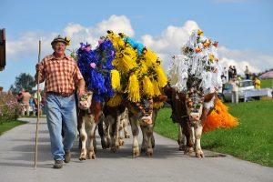 Zum Almabtrieb gibt´s auch heuer wieder Feste in Angerberg, Kelchsau und Hopfgarten. Foto: Hannes Dabernig