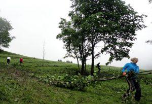 Bäume wurden entfernt, um die Almfläche frei zu halten. Foto: Nathalie Harms