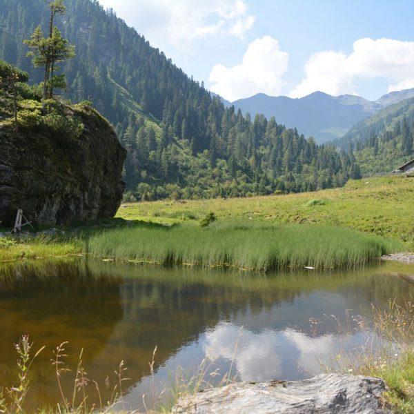 Raubtierrisse in Tiroler Almgebieten treiben Bauern Sorgenfalten auf die Stirn, teilweise werden Tiere schon wieder heimgeholt. Tierschutz sollte auch für Nutztiere gelten! Um Almwirtschaft auch in Zukunft zu sichern, wird ein Bejagen der Beutegreifer wohl unumgänglich sein. Foto: Spielbichler